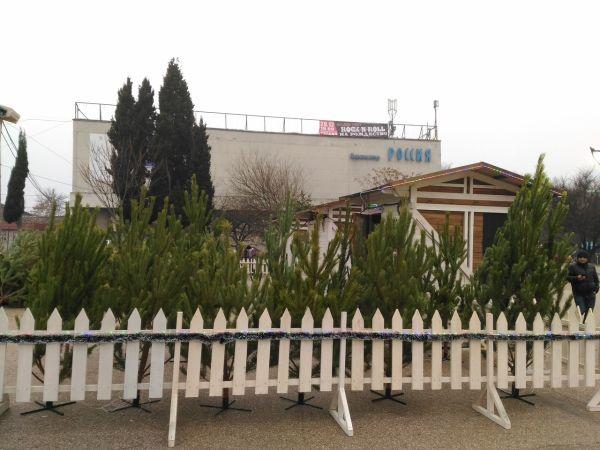 Где в Севастополе купить елку — адреса