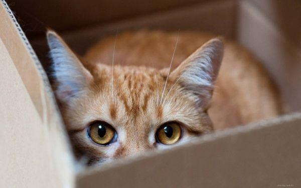 Кота из Канады по ошибке отправили почтой