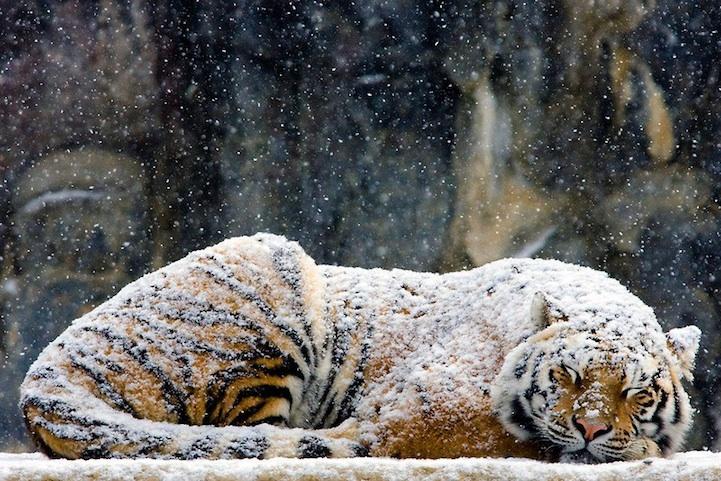 Отложение мокрого снега, гололед: чего еще ждать от погоды в Крыму 12 декабря