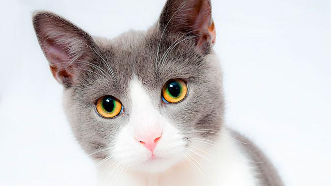 У нее лапки: кошка искусствоведа испортила картину XVII века
