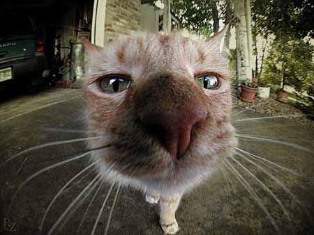 Любопытный кот обесточил половину района Крыма