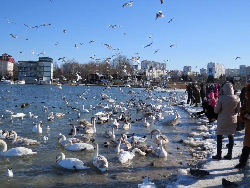 В Севастополе стартовала акция «Подкормите птиц зимой»