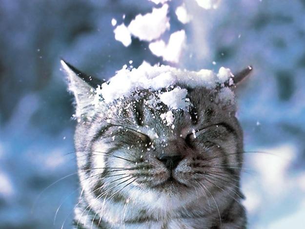 Снег, гололед, ветер: какой будет погода до конца новогодних праздников (прогноз на 6-8 января)