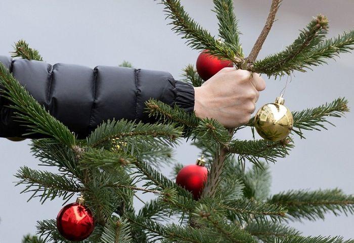 «ЕлкоВорот» в Крыму: выброшенные новогодние елки в Симферополе вывозили «ГАЗелями»