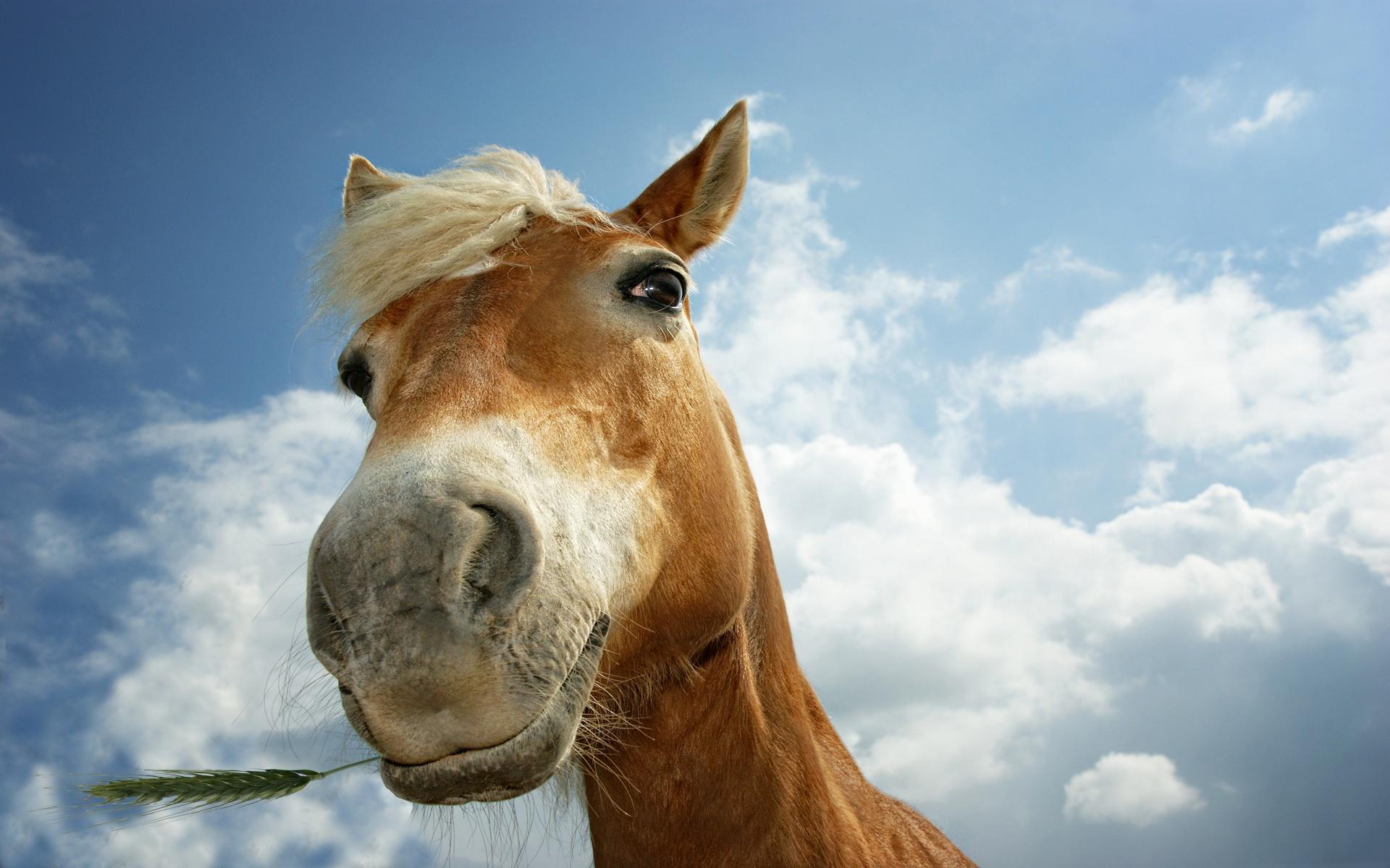 Севастополец выгулял коня из окна автомобиля (видео)