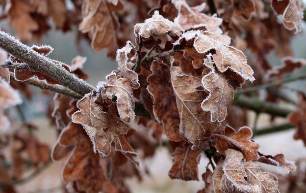 Синоптики рассказали, какой будет крымская погода в феврале