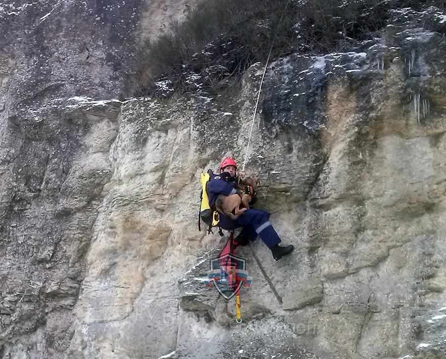 В Севастополе спасли собаку, просидевшую на скале двое суток