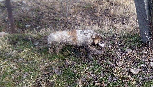 В Крыму спасли упавшую в канализацию собаку