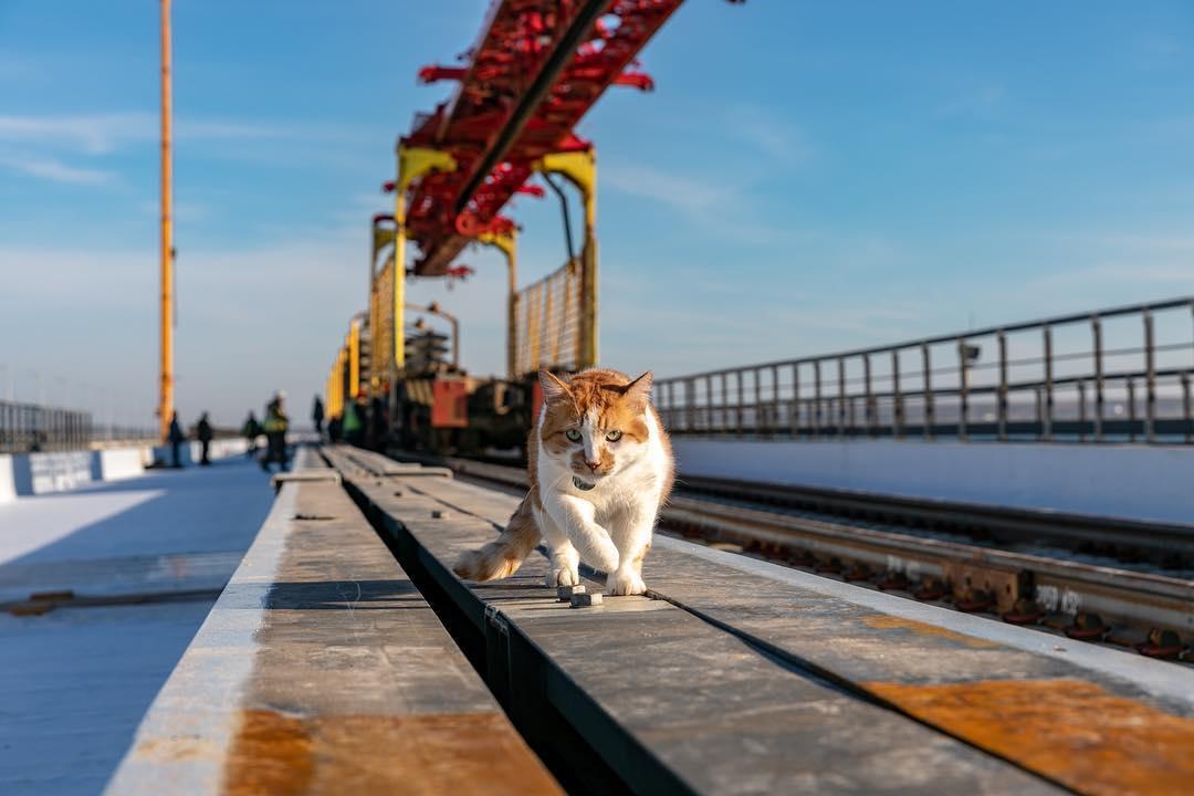 Как кот Мостик проверял новую железную дорогу Крыма