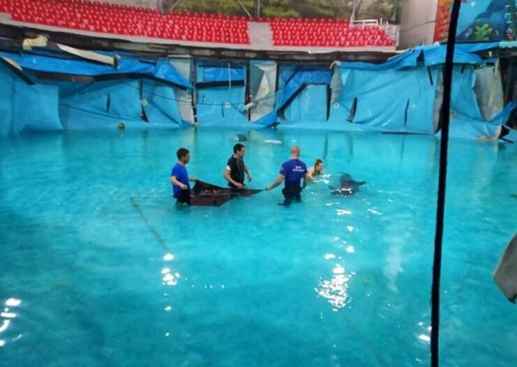 ЧП в Алуштинском аквариуме: дельфинов пришлось выносить на руках