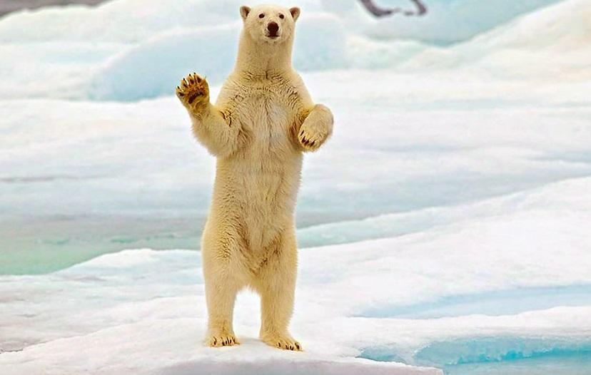 В российском регионе ввели режим ЧС из-за нашествия медведей