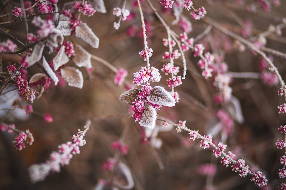 В начале недели в Крыму сохранится морозная и ветреная погода (прогноз на 25-27 февраля)