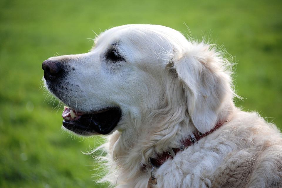В Крыму появилась первая в регионе собака-проводник
