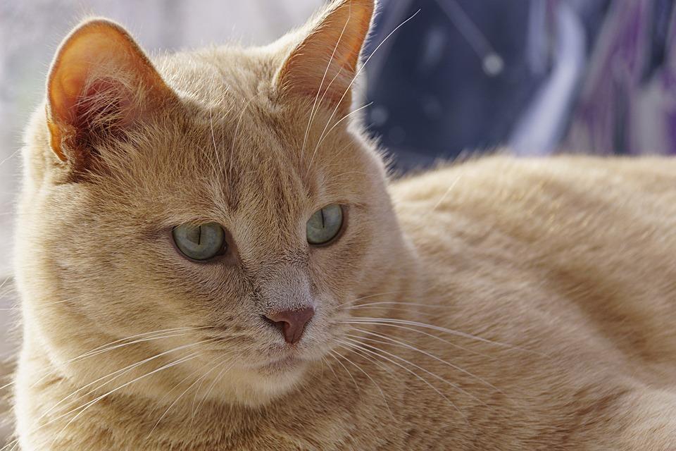 «Дыши, котик, дыши, маленький!»: на пожаре в Магадане спасатели реанимировали пострадавших кошек