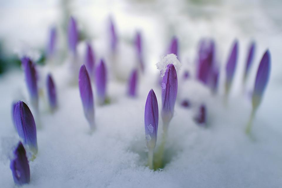«В апреле тоже еще может выпасть снег»: синоптик рассказала о «погодных качелях» в Крыму
