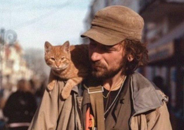 Полиция не будет заводить дело против задавившей кота в центре Симферополя женщины