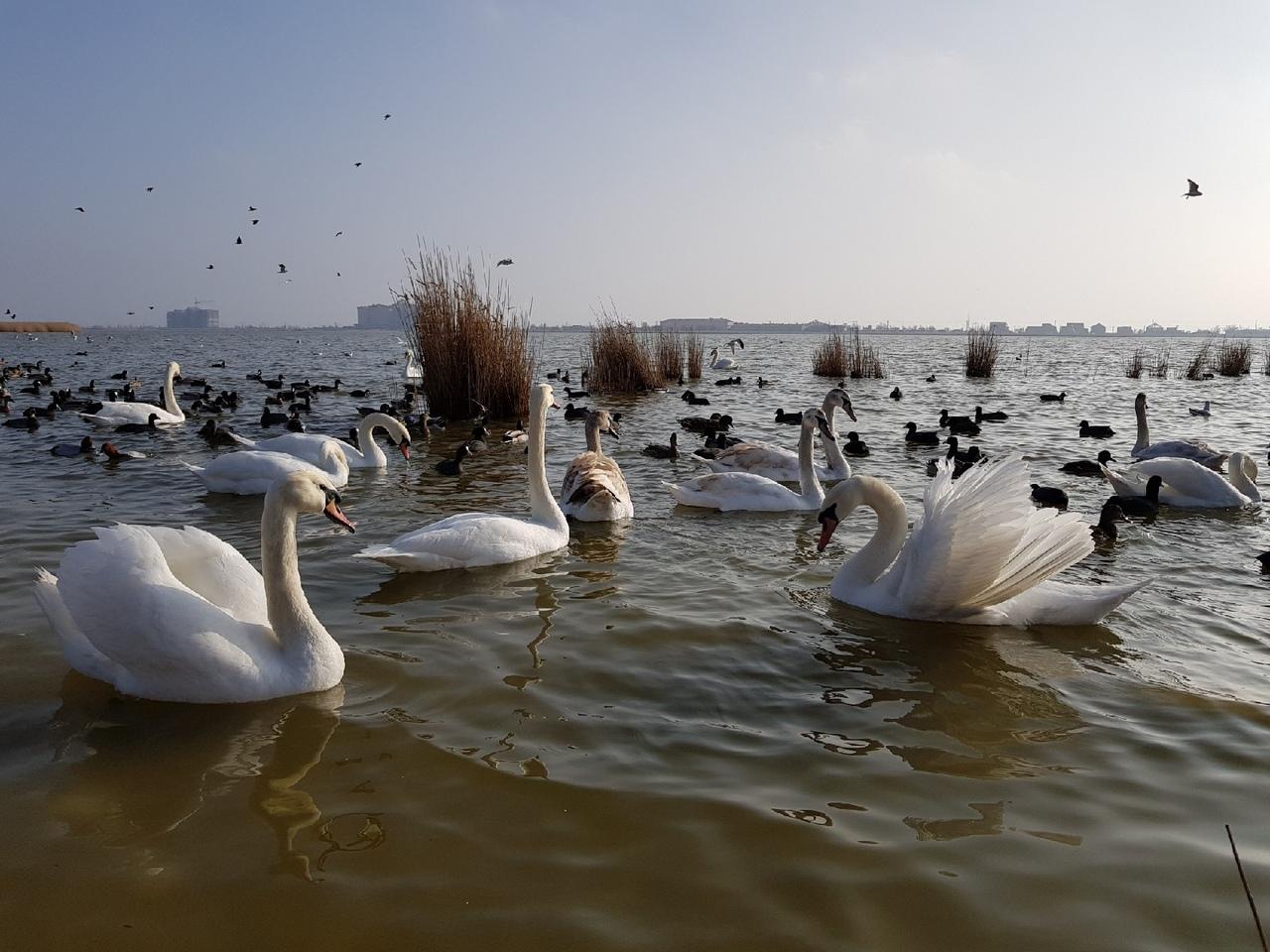 Блог путешественника по Крыму: Лебединое озеро в Евпатории