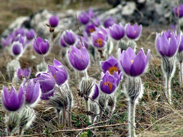 На стихийном рынке Симферополя торгуют редким крымским эндемиком