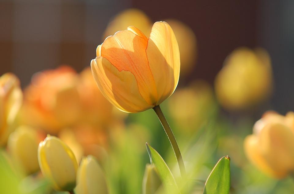 Синоптики рассказали, когда в Крым придет теплая весна