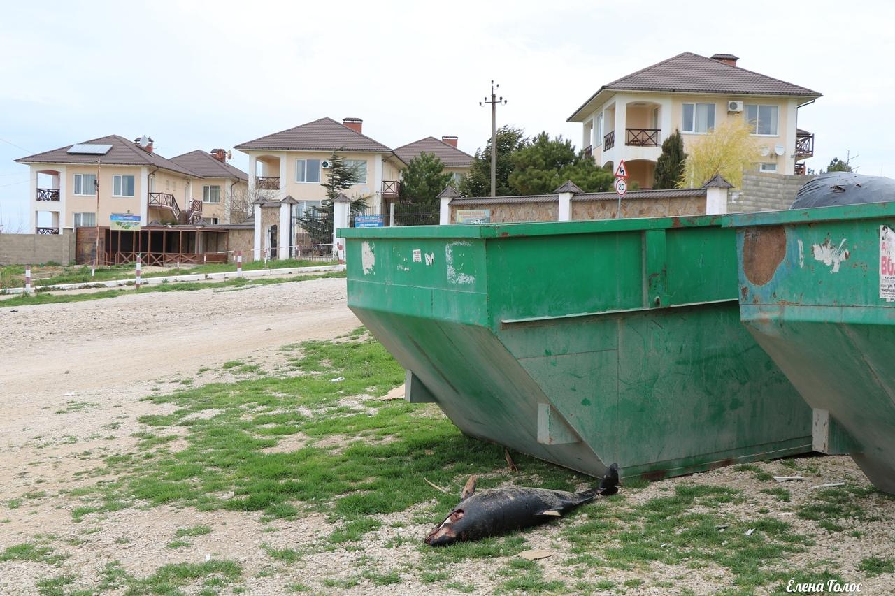 В Севастополе погибших дельфинов выбрасывают на мусорку