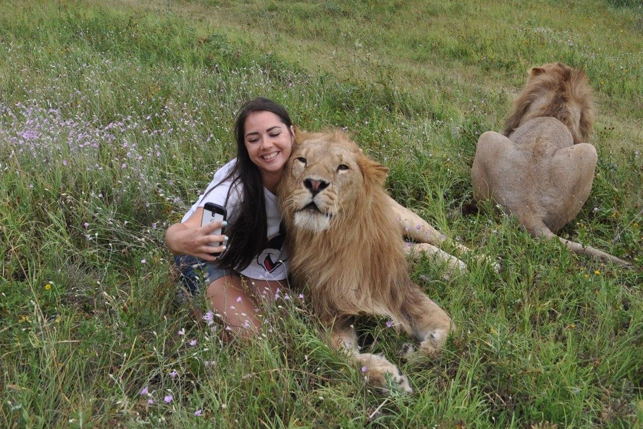 В крымском сафари-парке запретили экскурсию ко львам