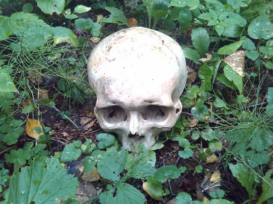 В крымском лесу найден череп мужчины