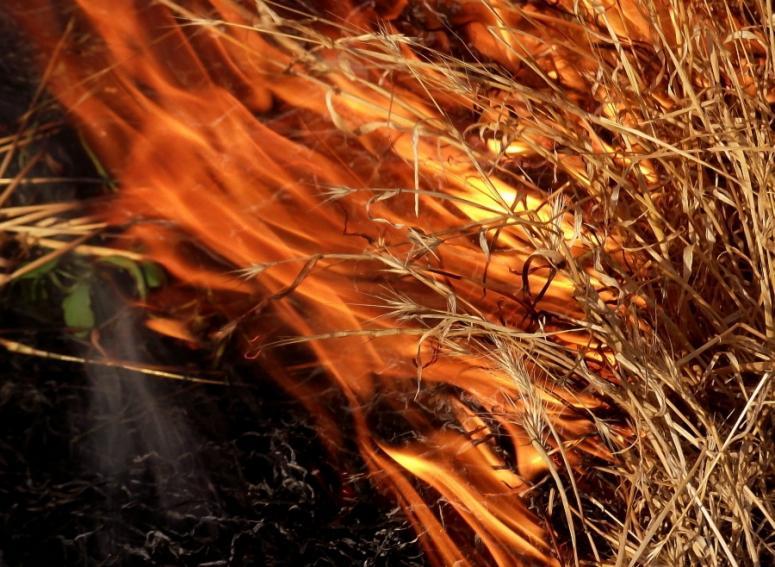 Потеплело: в Крыму горят гектары сухой травы