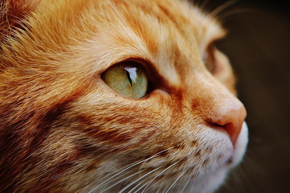 В крымском зоопарке кошка взяла под опеку осиротевших бельчат