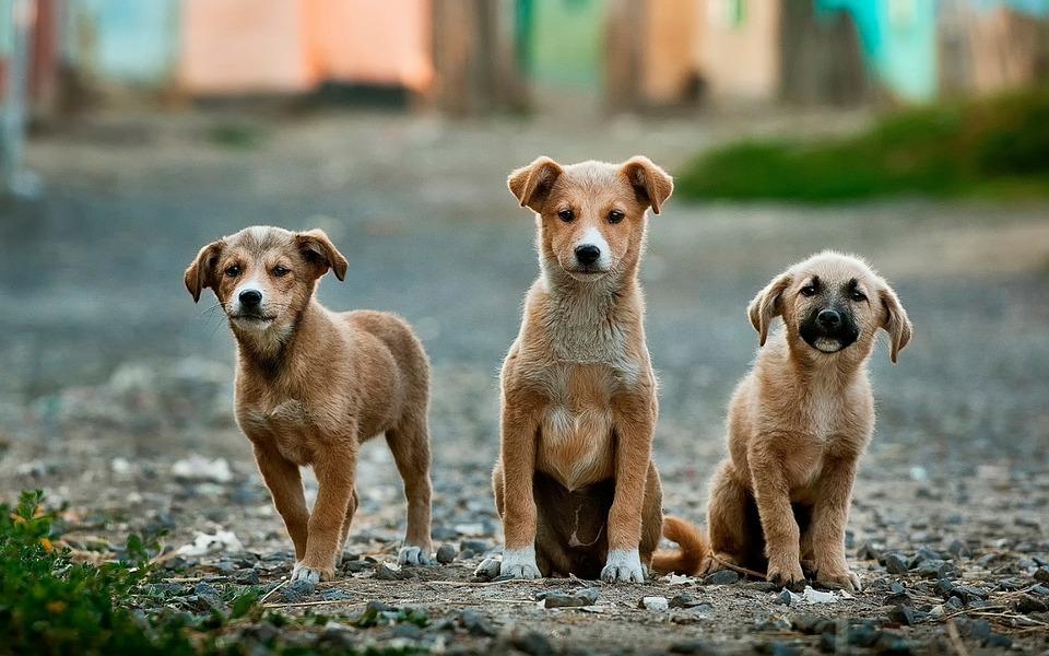 Державшую в квартире 30 собак крымчанку отправили в психбольницу