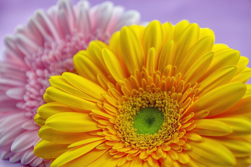 К Пасхе севастопольские соборы украшают цветами