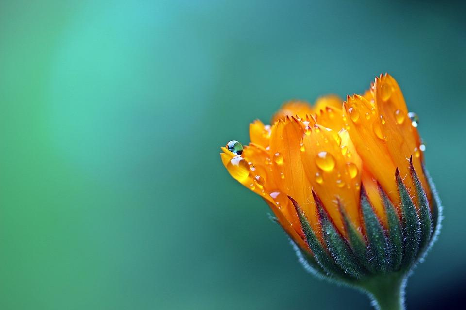 В Севастополе под проливным дождем поливают цветы