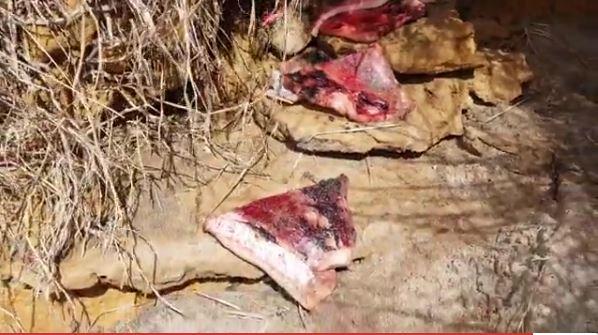 На крымских рынках продают вяленое мясо мертвых дельфинов – СМИ