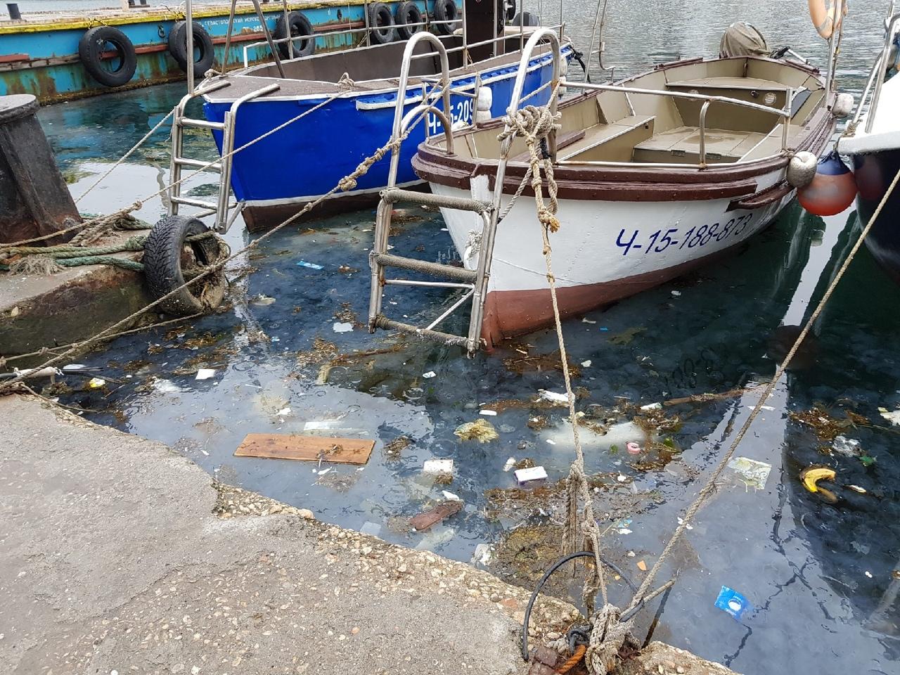 Балаклавская бухта превратилась в «коктейль» из медуз и мусора