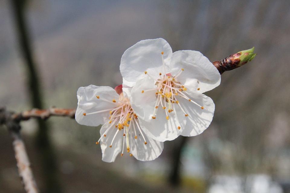 Погода порадует крымчан теплом перед первыми весенними грозами (прогноз на 9- 11 апреля)