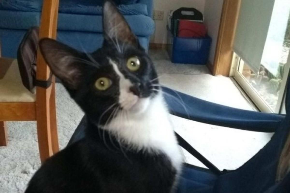 В Австралии котенок выжил после получасовой стирки в машинке