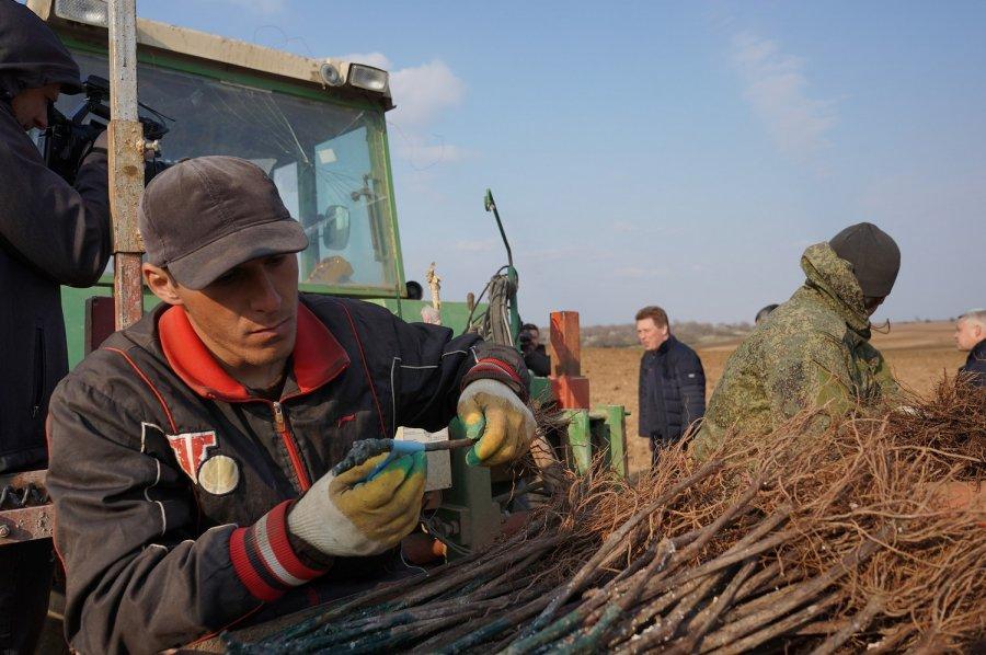 40 гектаров виноградников заложило предприятие «Артвин»