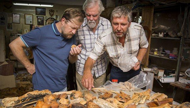 Останки животных из пещеры под «Тавридой» оказались древнейшими в России