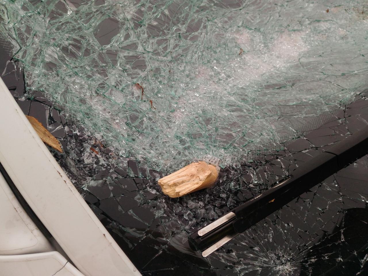 «Там ремонта на 200 тысяч»: в Севастополе во время движения на BMW упала ветка
