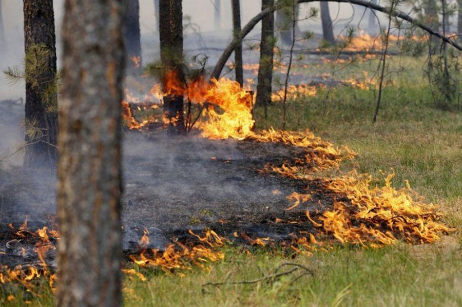 Экстренное предупреждение о высокой пожарной опасности в Крыму — МЧС