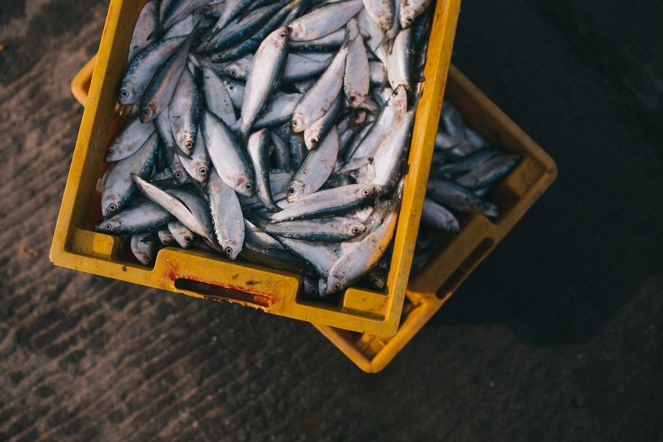 Переломы и ушибы: в Балаклаве матрос упал в накопитель для рыбы
