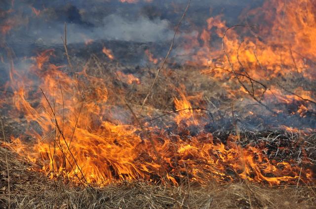 Пожароопасный период и человеческий фактор: в Крыму массово горят поля