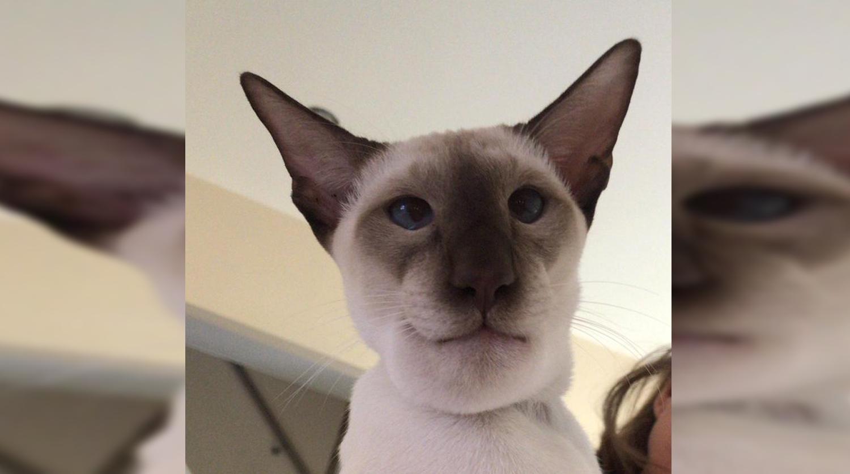 Кот съел осу и покорил пользователей Сети