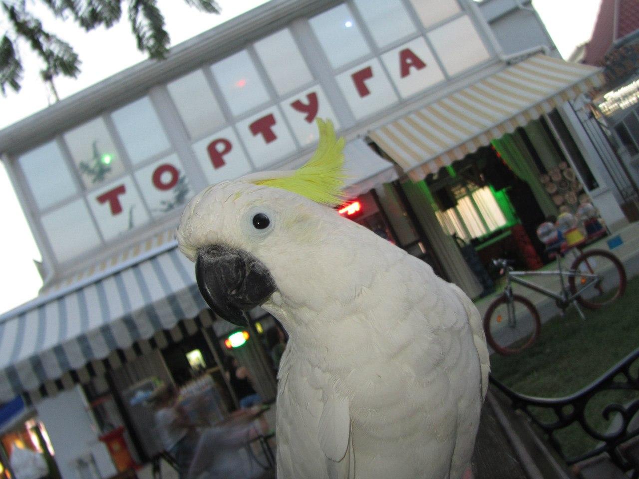 В центре Севастополя снесут незаконное кафе