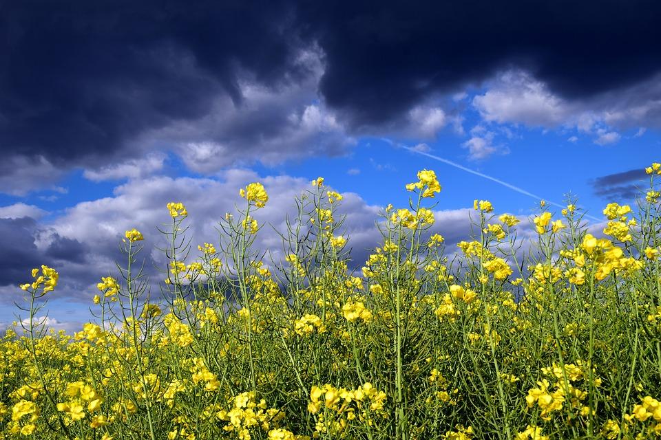 На выходных в Крыму пройдут грозовые дожди (прогноз погоды на 11 – 13 мая)