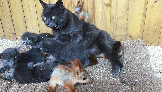В Крыму кошка Мурка «усыновила» маленьких бельчат
