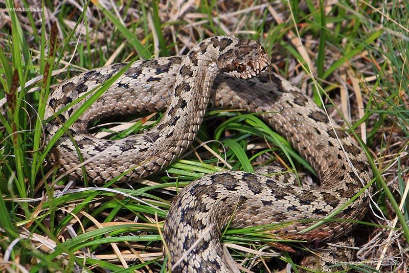Из-за дождей в Крыму активизировались змеи