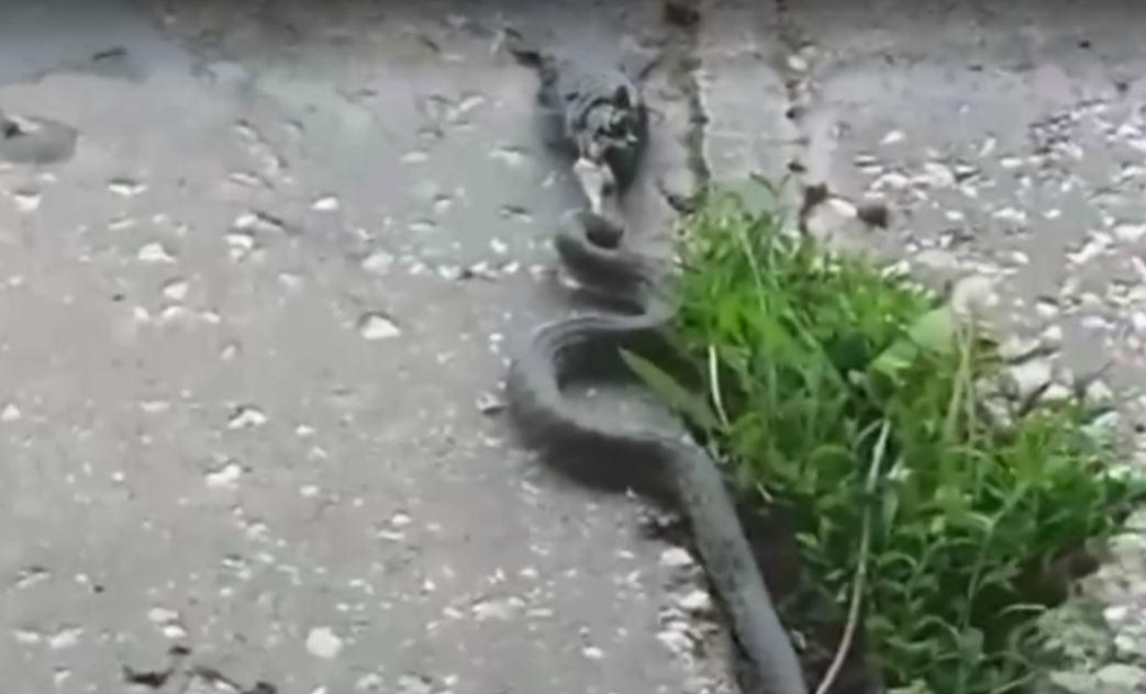 В соцсетях сообщают о нашествии змей в Крыму