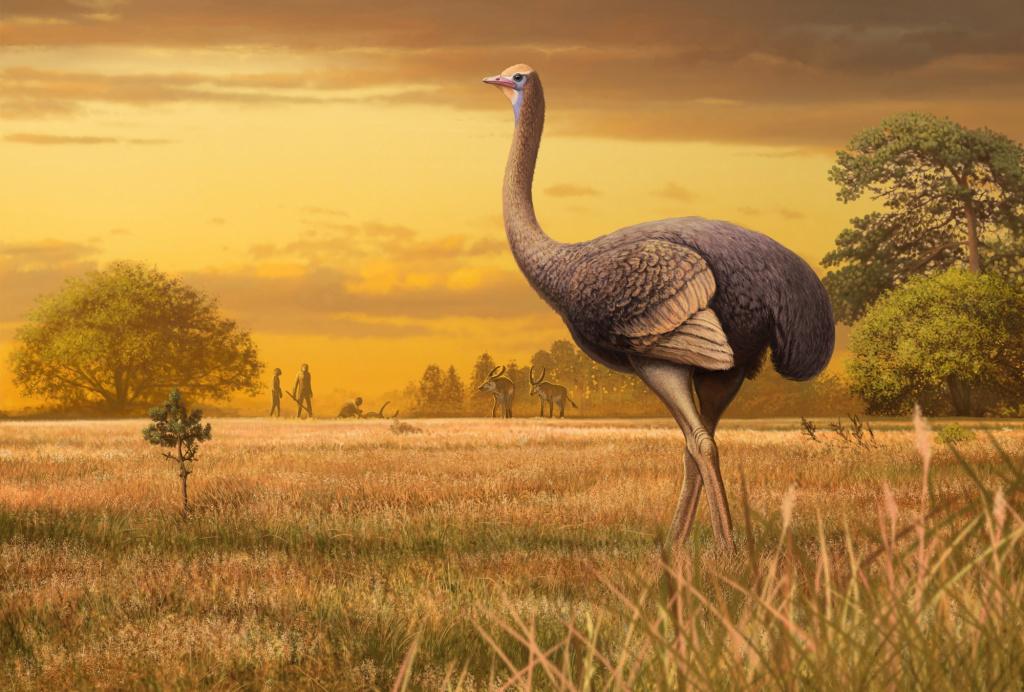 В три раза больше страуса: в пещере «Таврида» нашли древнюю гигантскую птицу