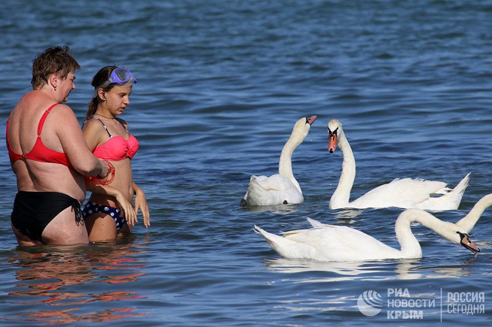 В Евпатории лебеди «переехали» с озера на городской пляж