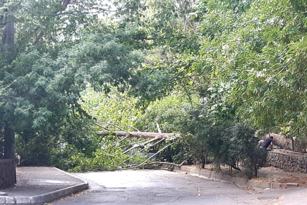 В Ялте огромное дерево упало на оживленную дорогу